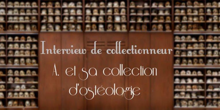 collectionneur cabinet de curiosités